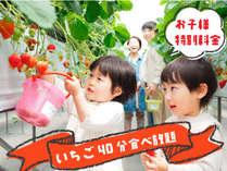 フルーツ王国岡山でイチゴ狩り♪40分食べ放題!