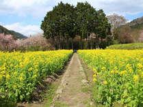 【春限定】~大原の春の訪れ~筍尽くし京懐石コース