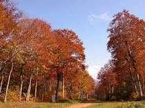 美しい並木道をゆっくりと歩いてみませんか?