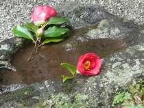 2~3月頃までお部屋から椿の花ご覧いただけお寛ぎいただきます。
