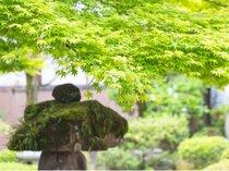 【庭園】全客室から望める日本庭園。古き良き時代の香が漂う。