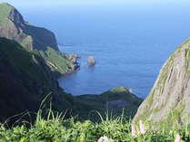 【桃岩展望台へ早朝お散歩】礼文島の花畑にご案内♪送迎付きプラン