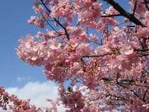【直前割】源泉掛流しの温泉を貸切♪伊豆の桜祭り満喫プラン