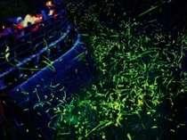 ★☆春の1週間限定♪夕食後ホタル観賞送迎バス付☆★【一泊二食】≪海側和室他≫料理長おまかせ会席プラン