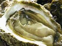 夏の王様「岩牡蠣」。綺麗な海水と荒い波にもまれ、ギュっと旨味が凝縮。ミルキーな味は絶品!