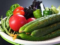 食材◆フローラ戸狩の畑で育てた新鮮な野菜をご堪能ください。