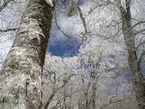 春の奥大山でスノーシューで白銀トレッキングと日本最高峰の肉質鳥取和牛をあじわう満足プラン!!