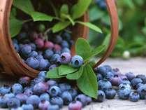 【新鮮なブルーベリーを堪能!!】 奥大山のブルーベリー摘み取り体験涼風会席プラン
