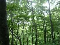 【新緑の奥大山でリーズナブルに泊まろう】新緑の奥大山プラン