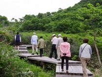 【ブナ・ミズナラの森をゆっくり歩く】スタッフと歩く鏡ヶ成散策プラン