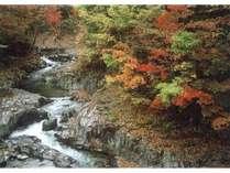 【平日限定】【秋の得々プラン】 ♪お得に紅葉狩りを楽しもう♪ <一泊二食付>
