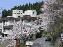 周辺の桜が満開の4月