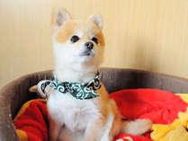 【施設内】看板犬のアグネスです。おとなしい性格なので犬が苦手な方もご安心♪