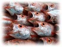 白身のトロと言われる、高級魚「のど黒」