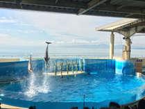 *【新江ノ島水族館】見ごたえたっぷりなイルカショーをお楽しみください♪