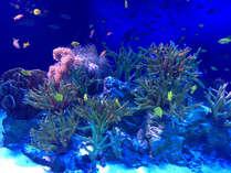*【新江ノ島水族館】 ウミガメやペンギンなど様々な海の生物をご覧頂けます。