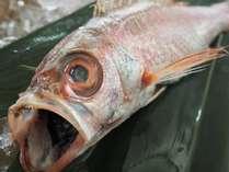 *高級白身魚「のどぐろ」