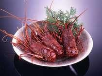 海の食材の王様・伊勢海老。料理長が、食感と味が一番良いとされるサイズを自信を持って厳選しております。