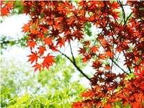 行楽シーズン☆紅葉も綺麗ですよ!