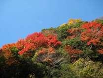 【直前割】【10月連休】10月6・7日がお得!行楽の秋!食欲の秋!海鮮浜焼きと和洋中バイキング