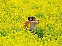 一面の菜の花畑が広がる「マザー牧場」へはGO♪