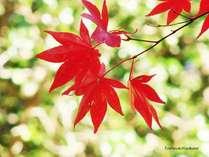 紅葉までまだまだだけど心まで秋色に染まります☆