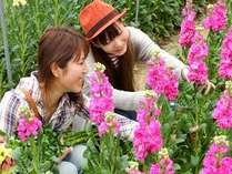 お花摘み♪(車約10分)