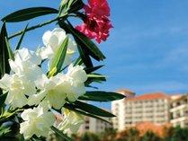南国の花々が咲き誇るザ・ブセナテラス