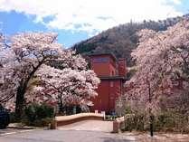 施設外観 桜 3