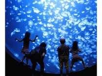 加茂水族館(クラゲドリーム館)(一久よりお車5分)