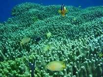 サンゴ礁 ~グラスボートでは沖縄の青い海で様々な魚を見ることが出来ます