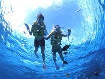 [スノーケル]色鮮やかな熱帯魚たちと戯れる感激体験!