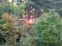 松林からの晩秋の日の出