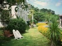 キバナコスモス咲き誇る庭