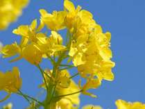 【春限定】春の芽吹きプラン◎ポカポカ陽気に誘われて♪特典<温泉手形>付