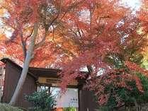 色付く紅葉の表玄関
