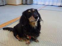 ワンコも一緒にお出かけ♪小型犬(5kg未満まで)同室可能なお部屋をご用意しております。