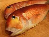 「春の季節限定」春の食材と鯛のフルコース【鯛づくし会席】