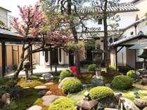 春の庭園、桜は遅咲きの八重桜