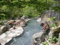 新緑の大野天風呂