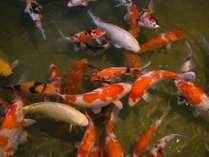 【外観】館のまわりを囲むように配されたお堀には、元気に泳ぐ鯉の姿。お堀にかけられた橋の上から眺める。