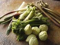 【こだわり食材】自然溢れる飛騨高山は山菜の宝庫。澄んだ空気と清らかな水で育った山菜をご賞味ください。