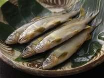 【こだわり食材】飛騨高山の清流で育った天然の鮎や岩魚。シンプルに塩焼きでお召し上がりください。