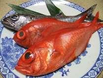 須崎港に水揚げされる「日戻り金目鯛」と「黒ムツ」