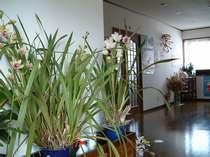 館内には、花好きの女将が飾る花がたくさん