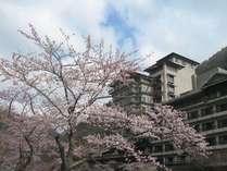 桜の見ごろは、例年4月中旬ごろ