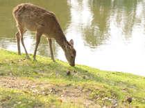 *可愛い鹿が沢山いる奈良公園へは当館から徒歩圏内♪