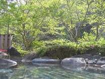 【露天男湯】桜も終わり新緑の季節の様子です