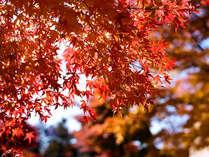 英彦山の紅葉を満喫!