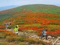 【栗駒山】美しい紅葉を眺めながらの登山はいかがですか?